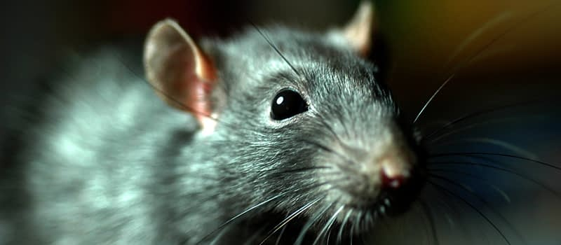 Factors to Consider When Looking for a Good Pest Control Company