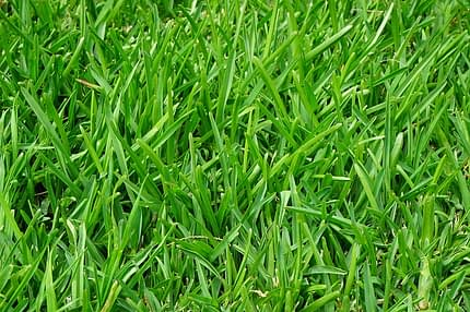 Tips on How to Maintain Your Lawn Properly